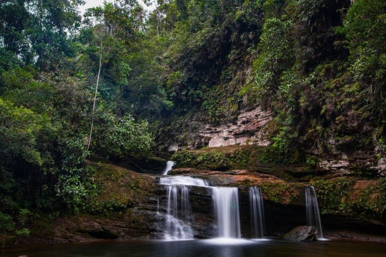 Study Shows Colombian Guerrillas Were Guardians of the Forest
